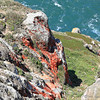 Furry Red Algae (Trentepohlia) on Rocks near Point Reyes Lighthouse