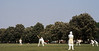Cricket players, blossoming chestnuts