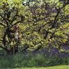 David lurks in a tree