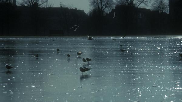 gp034-january birds