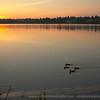 ducks at sunrise on green lake