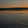 a duck at sunrise on green lake