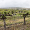 One vineyard of many