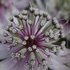 White Flower in Bloom