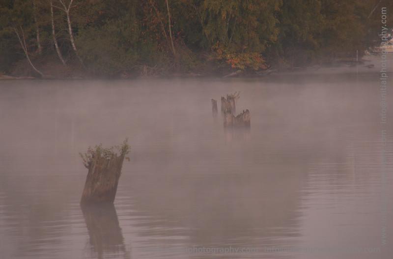 Morning mist on Lake Washington from the Arboretum