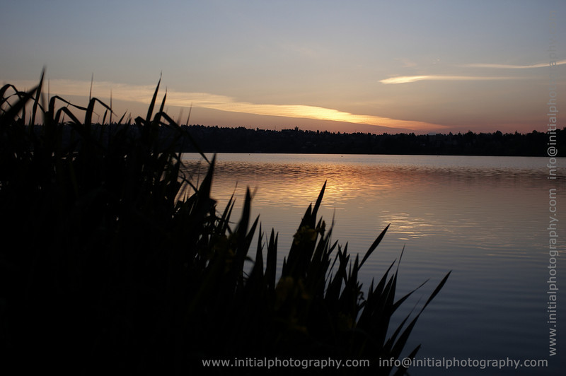 Irises silhouetted at sunrise, Green Lake Park