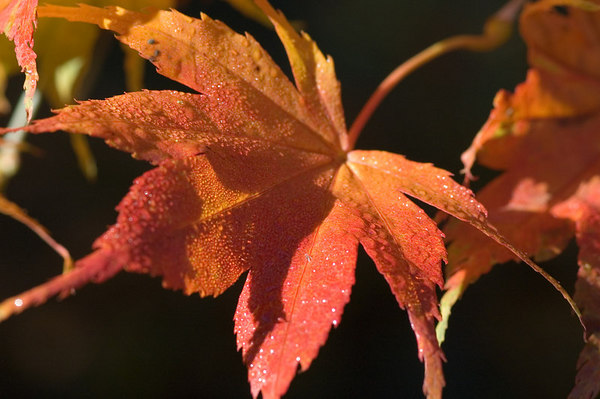 wet fall leaf