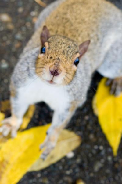 A curious squirl
