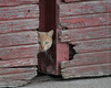 "Barn cat (more Texas pictures <a href=""/gallery/1400653"">here</a>)"