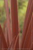 "Red leaves (more Close Up pictures <a href=""/gallery/1400575"">here</a>)"
