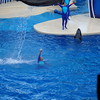 This Dolphin jumped  so high , it's almost out of the frame.