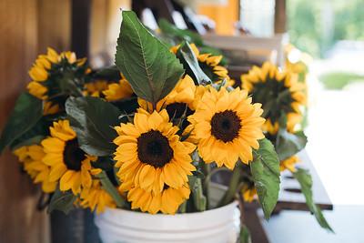 BPFSunflowers20191