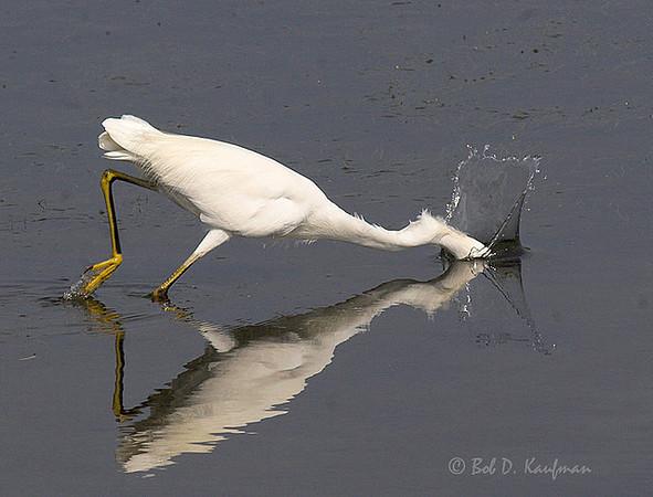 Snowy Egret<br /> Bolsa Chica