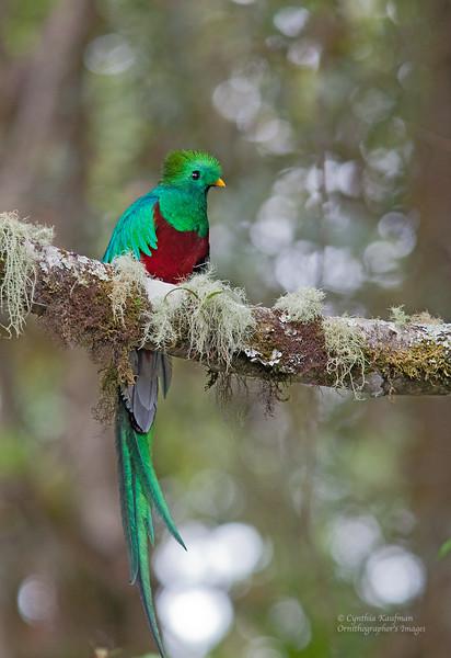 Resplendent Quetzal<br /> Costa Rica<br /> March 31, 2015