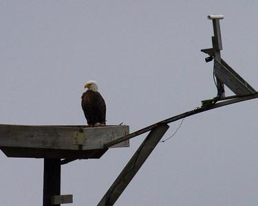 Ornithology 101