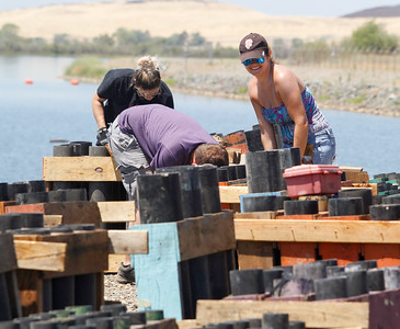 Amber Vitito and the crew from Pyro Spectaculars set up the racks for the Fourth of July firework show July 3, 2017 at the Thermalito Forebay in Oroville, California.  (Emily Bertolino -- Mercury-Register)