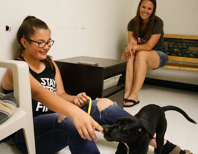 Lacey Blasy and Jamie Hamilton spend time with a puppy at the Northwest SPCA to see if they'd like to take her home  July 6, 2017 in Oroville, California.  (Emily Bertolino -- Mercury Register)