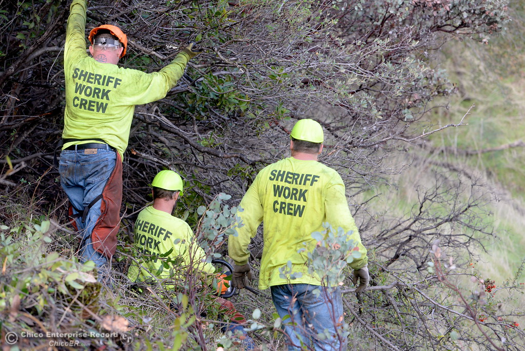 . Members of a Butte County Sheriff\'s work crew are seen near the Bidwell Canyon Trail at the Saddle Dam Day use facility as they work on a Fire Safe Council fuel reduction project below Kelly Ridge Road in Oroville, Calif. Jan. 11, 2018.  Correctional Deputy Ken Jones said the task includes a fuel reduction fire break along 8 acres and they have until March 1st to complete the project. Jones said he has between 6 to 9 workers about four hours per day and are clearing approx. 1/4 acre per shift. (Bill Husa -- Enterprise-Record)
