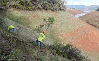 Members of a Butte County Sheriff's work crew are seen near the Bidwell Canyon Trail at the Saddle Dam Day use facility as they work on a Fire Safe Council fuel reduction project below Kelly Ridge Road in Oroville, Calif. Jan. 11, 2018.  Correctional Deputy Ken Jones said the task includes a fuel reduction fire break along 8 acres and they have until March 1st to complete the project. Jones said he has between 6 to 9 workers about four hours per day and are clearing approx. 1/4 acre per shift. (Bill Husa -- Enterprise-Record)