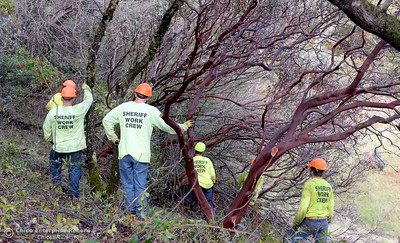 Members of a Butte County Sheriff's work crew are seen near the Bidwell Canyon Trail at the Saddle Dam Day use facility as they work on a Fire Safe Council fuel reduction project below Kelly Ridge Road in Oroville, Calif. Jan. 11, 2018.  (Bill Husa -- Enterprise-Record)