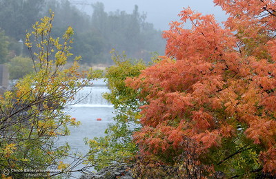 Fall colors paint the landscape as rain falls near the Feather River Nature Center and the Fish Barrier Dam in Oroville, Calif. Friday Oct. 14, 2016. (Bill Husa -- Enterprise-Record)