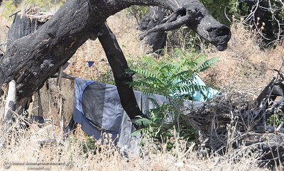 Evidence of a homeless encampment can be seen in some trees at Riverbend Park in Oroville, Calif. Friday Sept. 22, 2017. (Bill Husa -- Enterprise-Record)