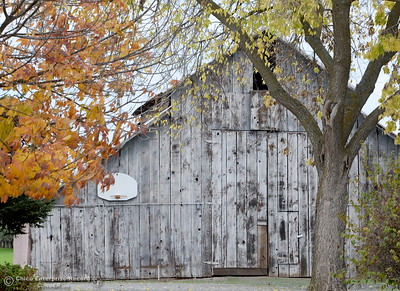 Fall colored leafs surround an old barn with a basketball hoop seen along Stanford Lane in Nelson, Calif. Monday Oct. 24, 2016. (Bill Husa -- Enterprise-Record)