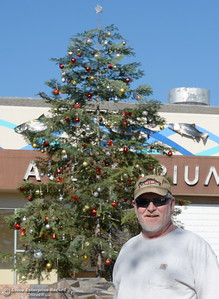 Mark Riggs smiles beside the town Christmas Tree that he helped with in Oroville, Calif. Wed. Nov. 29, 2017. Riggs also said the tree was donated by J W Bamford Inc. and volunteer Chrissy Riggs helped with the tree. (Bill Husa -- Enterprise-Record)
