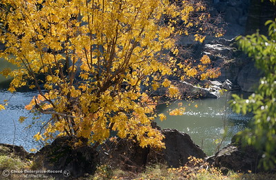 Fall colors are seen along the Feather River near the old Green Bridge in Oroville, Calif. Wed. Nov. 29, 2017. (Bill Husa -- Enterprise-Record)