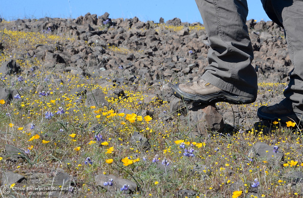 . Waterproof boots are a help to hikers enjoying a stroll through the wildflowers just beginning to bloom on Table Mountain Monday March 5, 2018. Hikers 16-years or older are now required to have a Lands Pass or valid hunting or fishing license. (Bill Husa -- Enterprise-Record)