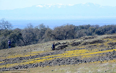 Hikers enjoy a stroll through the wildflowers that are just beginning to bloom on Table Mountain Monday March 5, 2018. Hikers 16-years or older are now required to have a Lands Pass or valid hunting or fishing license. (Bill Husa -- Enterprise-Record)