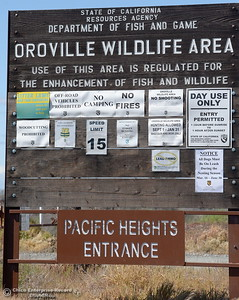 in the Oroville Wildlife Area Friday March 23, 2018.  (Bill Husa -- Enterprise-Record)
