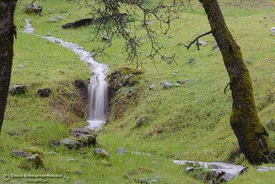 Water flows through a lush green landscape seen along Cherokee Road near Table Mountain as rains continue in the area Wednesday March 21, 2018.  (Bill Husa -- Enterprise-Record)