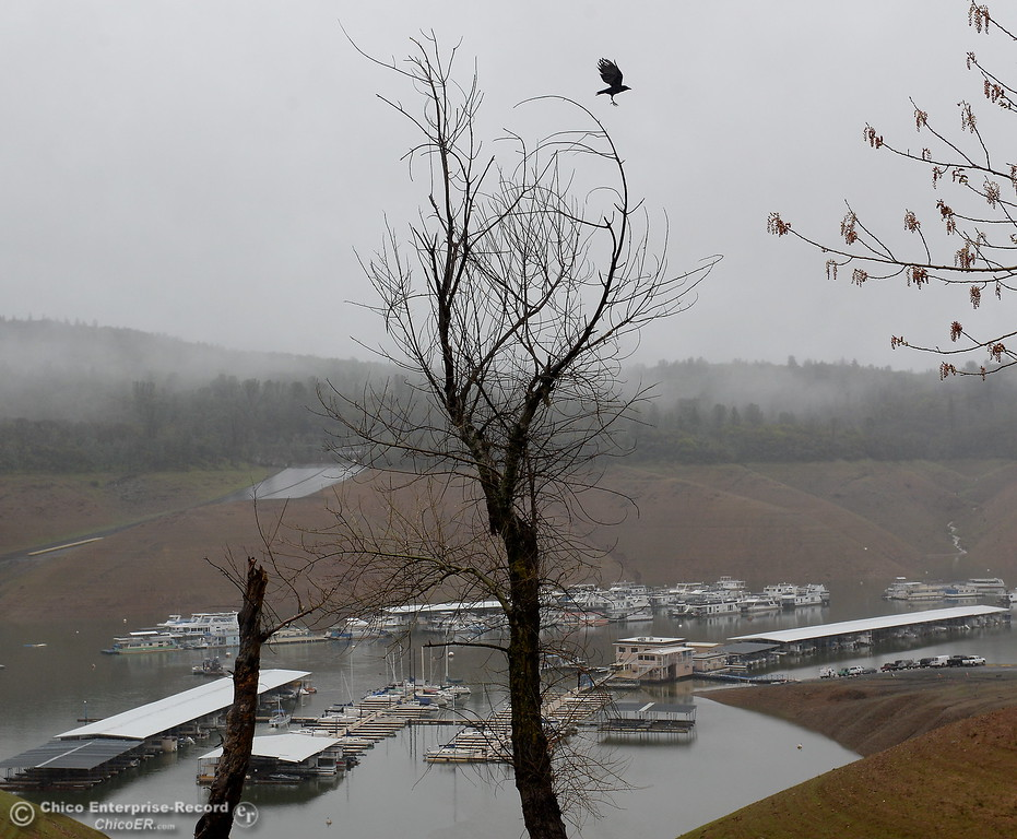. As the crow flys-   A crow flys off of it\'s perch near Bidwell Canyon Marina at Lake Oroville as rain pours around Butte County Calif. Wednesday March 21, 2018.  (Bill Husa -- Enterprise-Record)