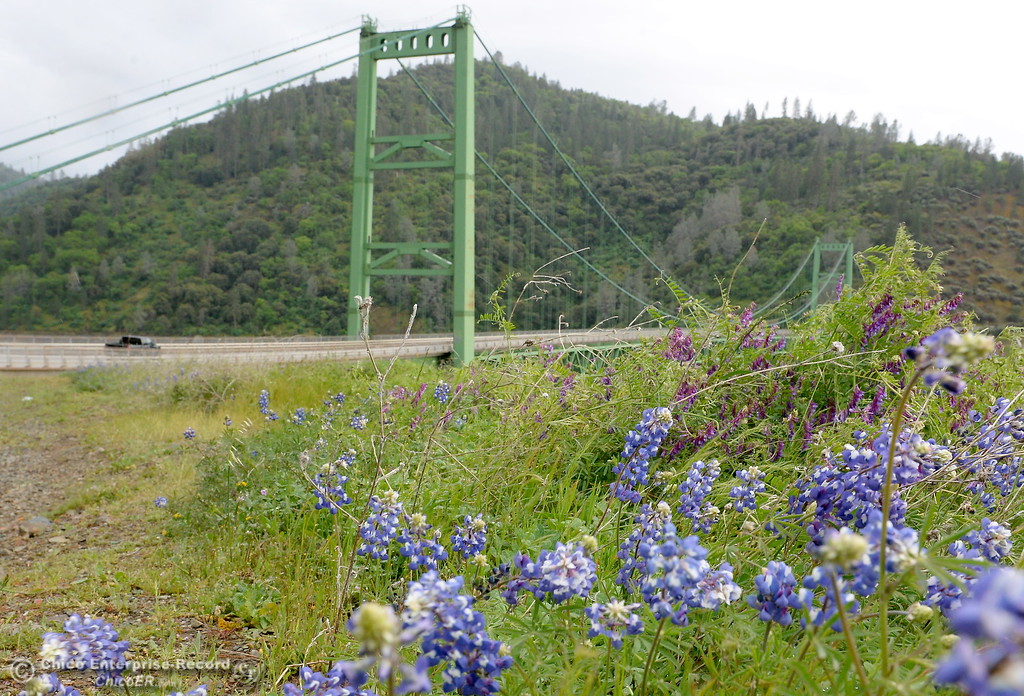 . Wildflowers continue to bloom along the lakeside s the wind blows and a light rain falls on Lake Oroville near the Bidwell Bar Bridge in Oroville, Calif. Tuesday, April 10, 2018. (Bill Husa -- Enterprise-Record)