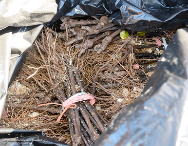 Starter vines shipped by Fed Ex are seen at Bangor Ranch Vinyard & Winery on La Porte Rd. in Bangor, Calif. Friday April 20, 2018. (Bill Husa / Chico Enterprise-Record)