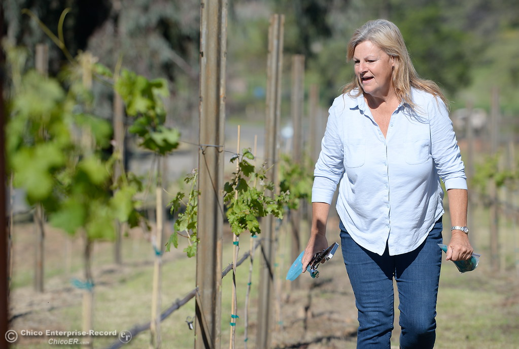 . Owner, Karen Pappillon smiles as she works on her new grape vines currently being planted at Bangor Ranch Vinyard & Winery on La Porte Rd. in Bangor, Calif. Friday April 20, 2018. (Bill Husa / Chico Enterprise-Record)