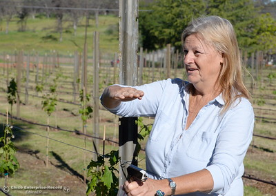 Owner, Karen Pappillon talks about her new grape vines currently being planted at Bangor Ranch Vinyard & Winery on La Porte Rd. in Bangor, Calif. Friday April 20, 2018. (Bill Husa / Chico Enterprise-Record)