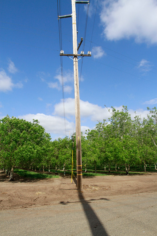 . Trimmed walnut trees grow a few hundred yards from where PG&E cut 70 almond trees Friday, April 27, 2018, under transmission lines on Mendonca Orchards property in Chico, California. Glenn Mendonca said the utility was willing to trim the walnut trees which are not on Mendonca Orchards property, but cut down 70 almond trees on Mendonca Orchards property. (Dan Reidel -- Enterprise-Record)