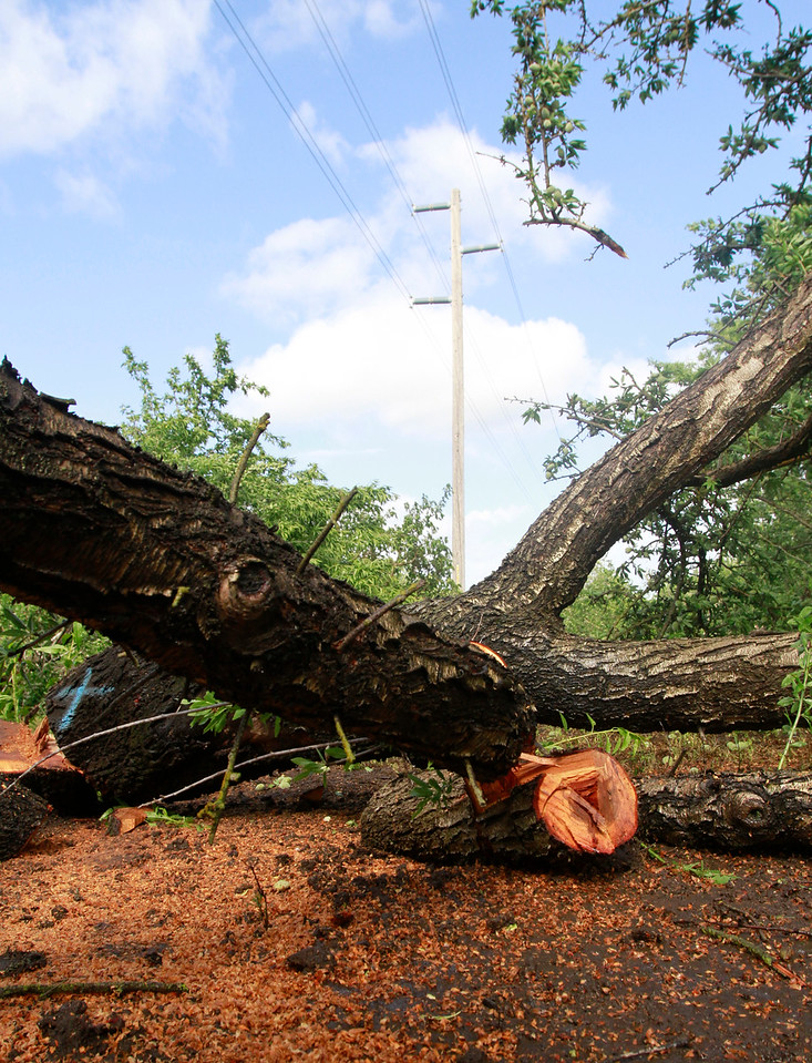 PG&E cut 70 trees Friday, April 27, 2018, under transmission lines on Mendonca Orchards property in Chico, California. (Dan Reidel -- Enterprise-Record)