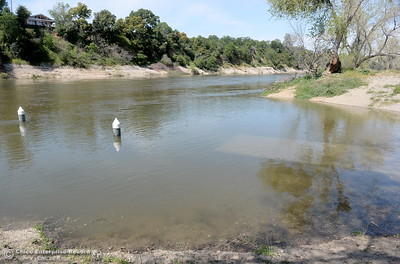 The poles that once held a dock at the Riverbend Park launch facility are showing the rising water in the Feather River at Riverbend Park in Oroville, Calif. Wed. April 4, 2018.  DWR has increased flows from 9,500 cfs at noon to 13,000 cfs at 1:00 p.m.. (Bill Husa -- Enterprise-Record)