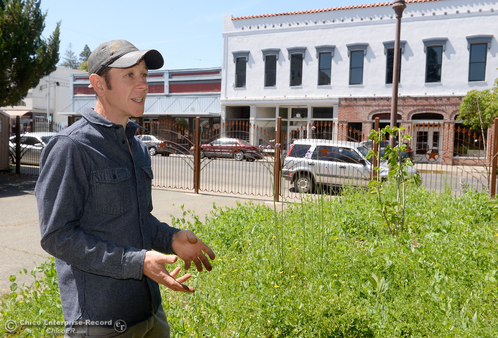 ". Permaculture expert Matt Trumm talks about a section of plants that will have a sign saying ""Not Weeds\"" at Union Square on Montgomery Street where he now runs a Farmers Market every Saturday from 7:30 - Noon starting May 5th through October 27th in Oroville, Calif. Wednesday May 2. 2018. (Bill Husa -- Enterprise-Record)"