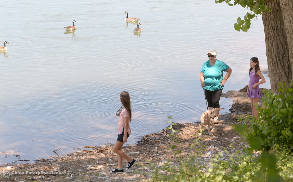 . Judy Cristiensen of Oroville walks a puppy named Daisy Bell while she watches a flock of Canada Geese swim by with her granddaughters Chloe and Ilie Christiensen around at Bedrock Park in Oroville, Calif. Monday June 5, 2017. (Bill Husa -- Enterprise-Record)