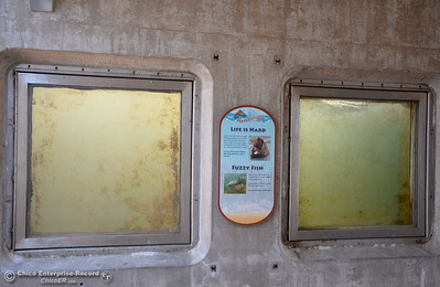 No fish are visible in the fish viewing windows at the Feather River Fish Hatchery in Oroville, Calif. Friday, June 23, 2017. A fish and wildlife representative said there have been sightings of lamprey's in the windows recently. (Bill Husa -- Enterprise-Record)