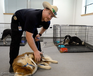 Butte County Animal Control Program Manager Ryan Soulsby checks on some dogs at the Butte County Animal Control and NVADG North Valley Animal Disaster Group small animal rescue facility in Oroville, Calif. Wed. July 12, 2017. (Bill Husa -- Enterprise-Record)