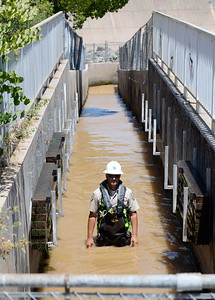 Department of Fish & Wildlife Technicians shut down the fish ladder and crowd out the remaining fish at the Feather River Fish Hatchery in Oroville, Calif. Mon. July 17, 2017. (Bill Husa -- Enterprise-Record)
