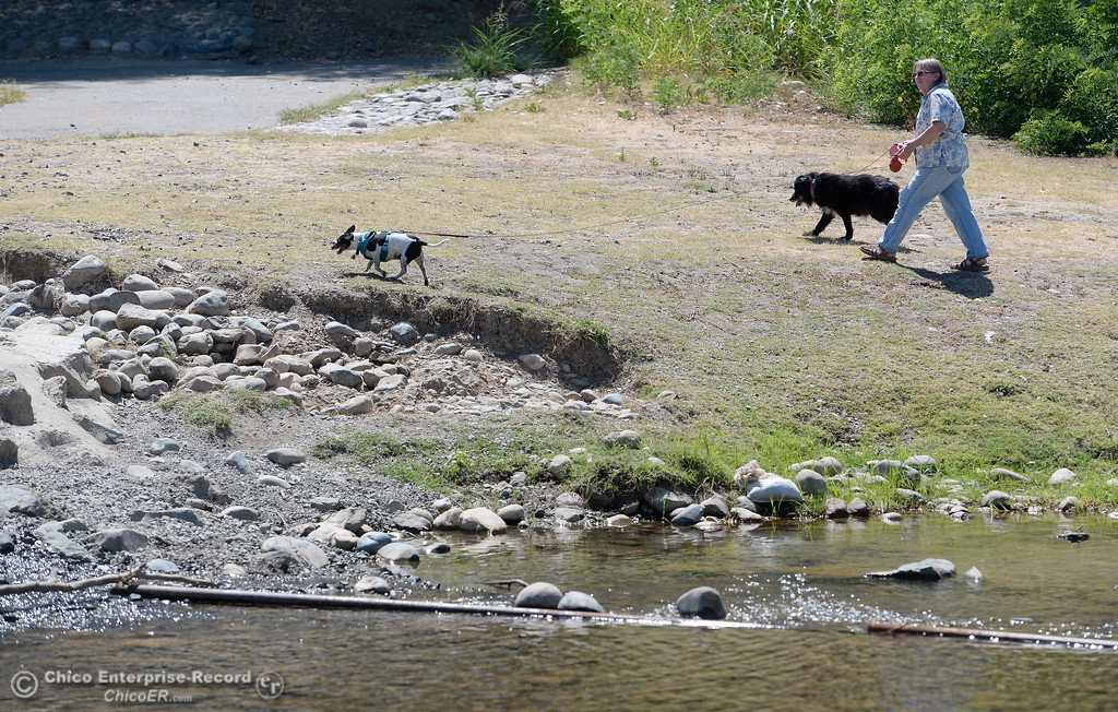 . Ramona Ramirez walks her dogs Charlie and Baby at Bedrock Park in Oroville, Calif. Wed. July 26, 2017. (Bill Husa -- Enterprise-Record)