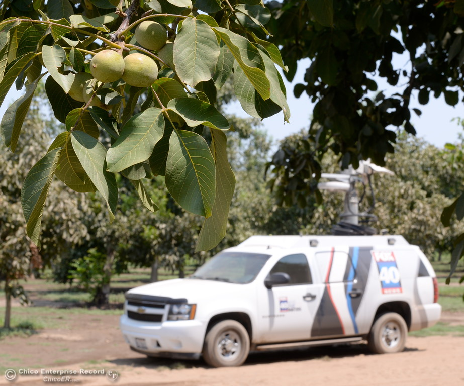 . A news vehicle sits in a Walnut orchard at J.E.M. Farms following a press conference announcing the filing of a claim against DWR for damages to JEM Farms and Chandon Ranch for lost acreage, lost production and cleanup/remediation costs due to the spillway failure in Oroville, Calif. Thurs. Aug. 3 2017. (Bill Husa -- Enterprise-Record)