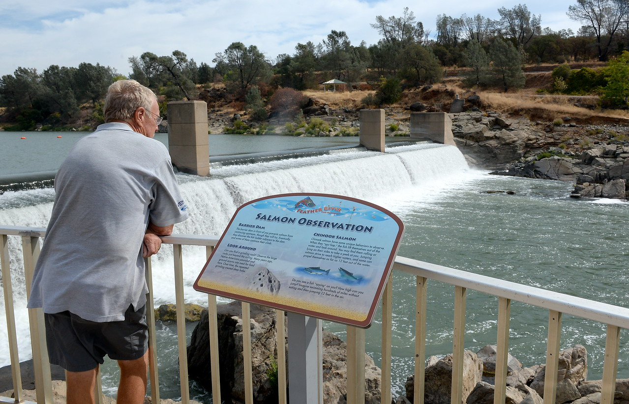 A man watches for fish activity near the Fish Barrier Dam Monday Sept. 18, 2017. The Feather River Fish Hatchery Salmon Ladder and viewing area opened today. (Bill Husa -- Enterprise-Record)