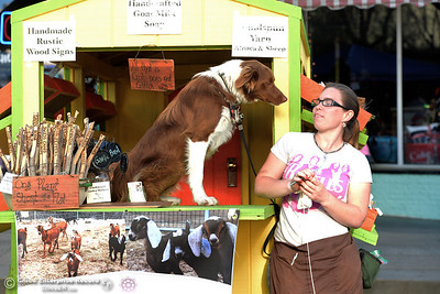 Kaite Hall and Gimli, the 10-month-old border collie and McNab dog, run the Shire Ranch Shoppe during the Historic Downtown Oroville Certified Farmers Market on Wednesday, March 30, 2016, on  Myers Street in Oroville, California. (Dan Reidel -- Mercury-Register)